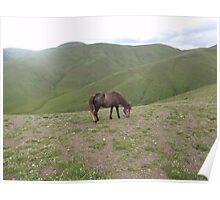 High Mountain Horse Poster