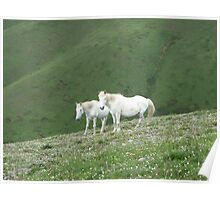 Two White Horses Cometh Poster