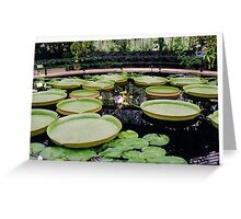 Water plants Greeting Card