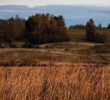 Autumn colors (Autumn 2010) by Antanas