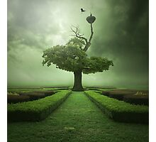 Oak Photographic Print