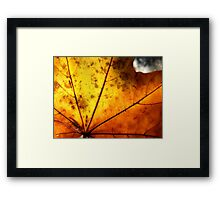 Letter Dropt From God? Framed Print
