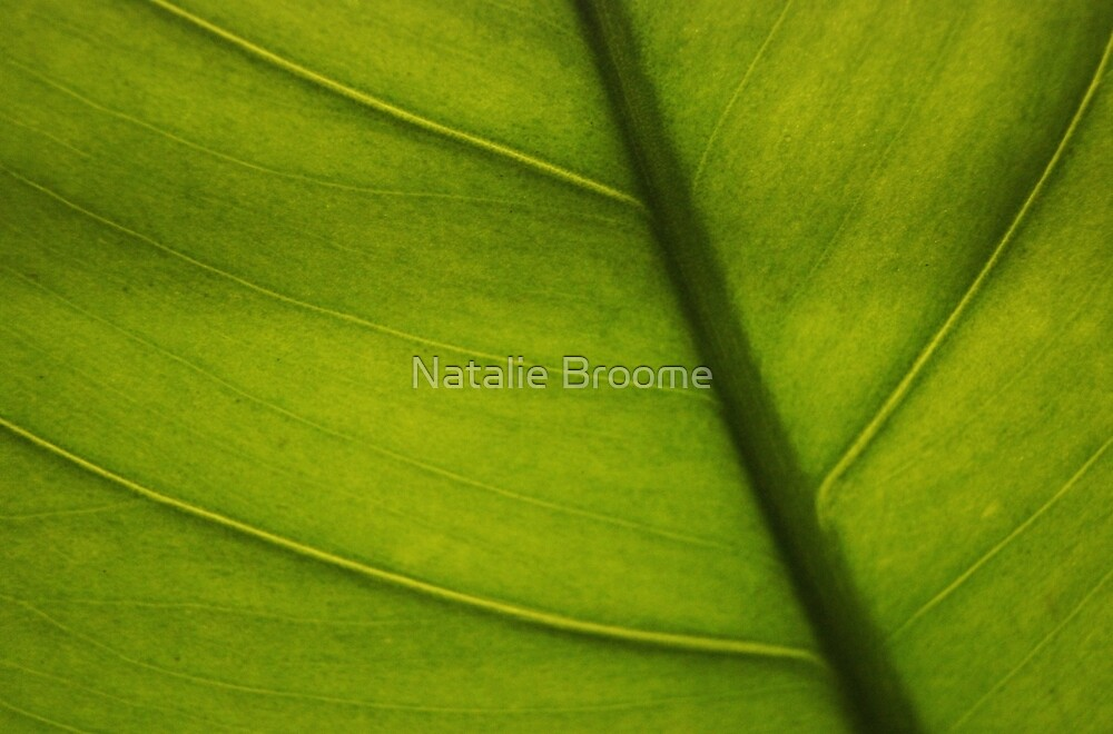 Leaf Abstract 2 by Natalie Broome