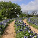 Bluebonnet Trail by Robert Armendariz