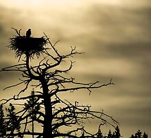 Eagles Nest by Chris Perry