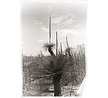 Grass Trees in Mono Poster