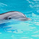 Bottlenose Dolphin by © Loree McComb