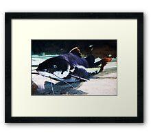 Huge Catfish Framed Print