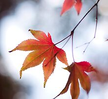 Autumn Leaves 6 by Natalie Broome