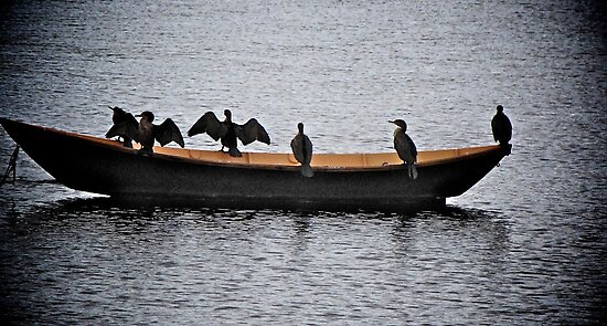 Cormorants Afloat! by Nancy Richard