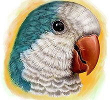 Blue quaker parrot realistic painting by lifewithbirds