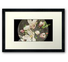 apple blossoms on moon Framed Print