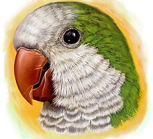 Green quaker parrot realistic painting by lifewithbirds