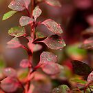 Red and green leaves by Dfilyagin