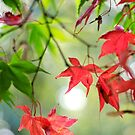Autumn Leaves 5 by Natalie Broome