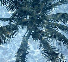 palm tree reflection by Leeanne Middleton