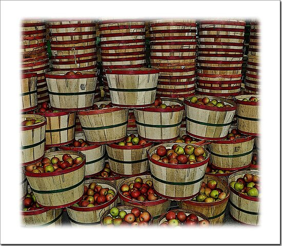 Carver's Apple Orchard   by lynell