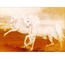 The Andalusians'... Photographic Print