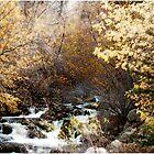 Scenic Beauty by tc5953
