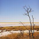 Etosha National Park 2 by Natalie Broome