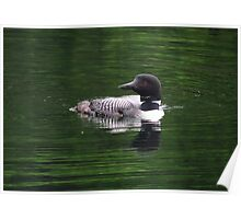 Loon- Northern Ontario Poster