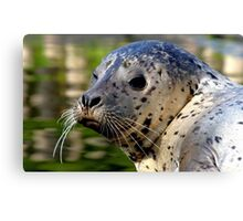Young Harbor Seal Canvas Print