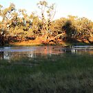 Early morning Camooweal Billabong Queensland by KazM