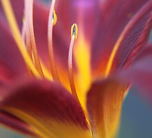 Expression of Joy in colours by Karue