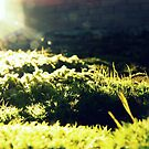 Moss-scape by eleveneleven