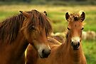 Exmoor Pony with Foal by Jo Nijenhuis