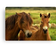 Exmoor Pony with Foal Canvas Print