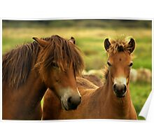 Exmoor Pony with Foal Poster
