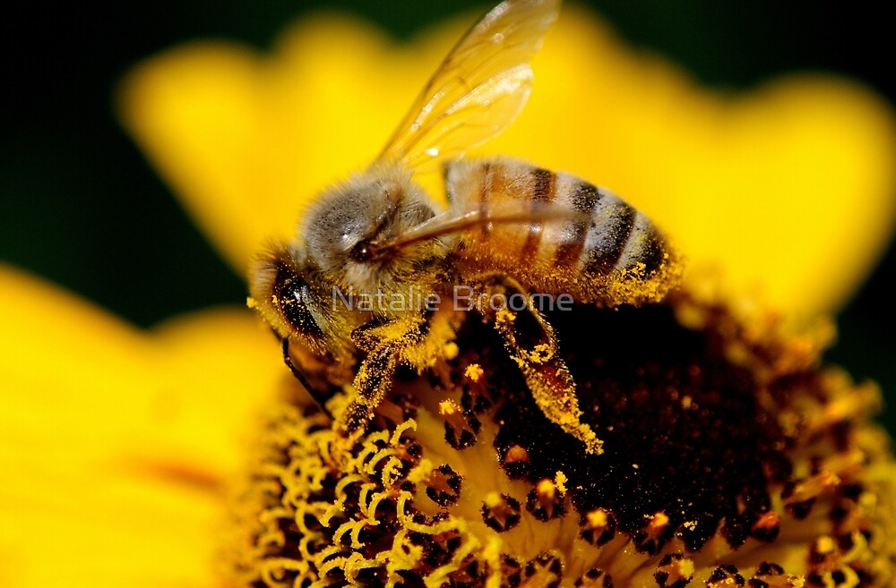 Honey Bee by Natalie Broome