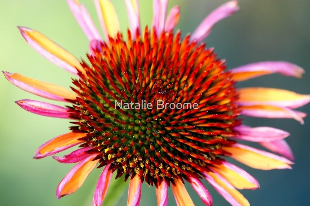 Summer Flower by Natalie Broome