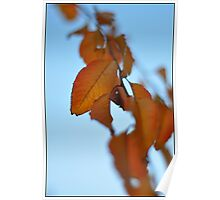 Fall Leaves & Blue Skies Poster