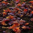 frosted leaves by jammingene