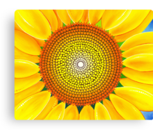 Beautiful sunflower of summer Canvas Print