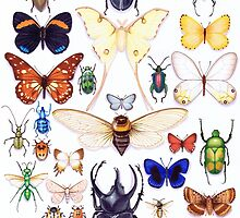 Insect collection by Vicky Pratt