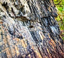 Shale Abstract by James Zickmantel