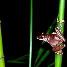 Vietnamese Frog by Natalie Broome