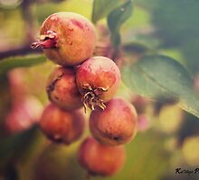 Berry Magic by KatMagic Photography