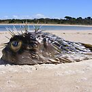Stranded Puffer Fish  by Esther's Art and Photography