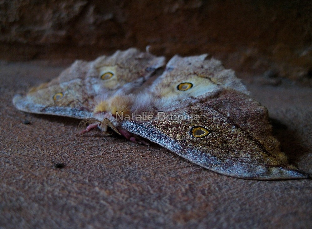 Moth by Natalie Broome