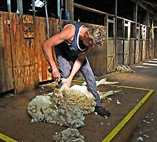 Sheep shearing at Shear Outback by Darren Stones