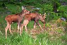 Twin Moose Babies by Jo Nijenhuis