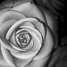 Rose 1 by Natalie Broome