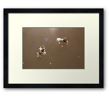 Diamonds on the Soles of their Shoes Framed Print