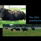 The BULL and His Cows by DAdeSimone