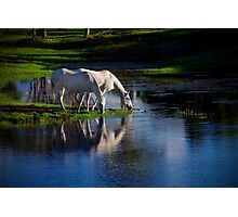 Reflections of silver Photographic Print