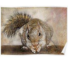 Blonde Squirrel Poster